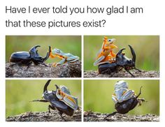 Is this not dan and Phil, the frog is so colorful and dan is all dark and also Phil tops
