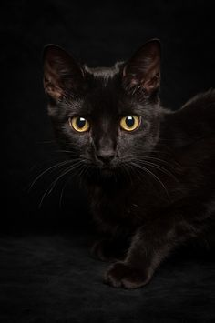 Black cat  Penelope P. Nutt