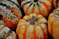 Who+doesn't+love+a+pumpkin+seed?+Especially+this+time+of+the+year+when+everywhere+you+turn,+there's+another+pumpkin+or+Jack-O-Lantern.+Over+the+years+I've+debated+whether+to+toss+the+seeds+or+use+'em+up+for+a+fun+recipe.+And+every+year+I+seem+to+create+a+new+recipe+or+fun+way+to+use+these+cute