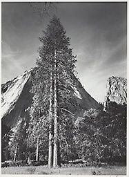 Ansel Adams American, 1902–1984, Trees and Cliffs, Yosemite National Park