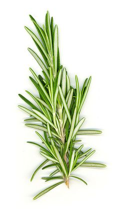 Rosemary Honey Hair Conditioner...1/2 cup honey  1/4 cup warmed olive oil (2 Tbsp. for normal to oily hair)  4 drops essential oil of rosemary