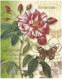 Gallery.ru / Фото #17 - Бабочки и цветы - Anneta2012