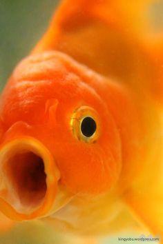 金魚の消化システムと給餌の関係
