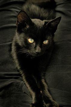 Cosa linda mo deusuu. Esses gatinhos são divos amo gato preto