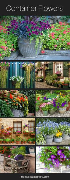 Stunning container flowers in pots and planters.