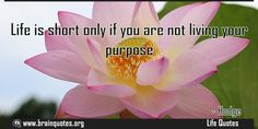 Life is short only if you are not living your purpose  Life is short only if you are not living your purpose  For more #brainquotes http://ift.tt/28SuTT3  The post Life is short only if you are not living your purpose appeared first on Brain Quotes.  http://ift.tt/2eSPtXD