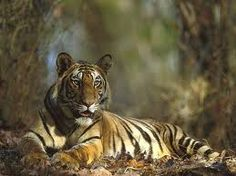 Circuit de Rajasthan et Tigre, Voyage rajasthan et tigre