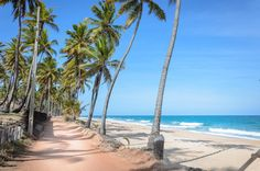 Sandy road surrounded by coconut trees next to a beautiful beach with the waves on a beautiful sunny day with blue sky. Praia do Seixas beach on Joao Pessoa PB, Brazil.