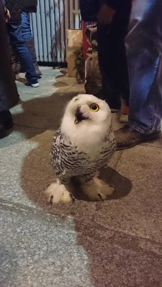 """""""This little guy was hoping that you'd buy him a beer. The bartender wouldn't serve him...as he is an owl."""""""