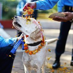 From Kukur Tihar, the Nepalese festival which thanks dogs for being our friends