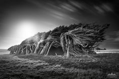 Here at the very most southern point of the South Island, you'll find Slope Point. And this is where the trees are bent sideways from the fierce cold Antarctic Ocean winds - a truly unique sight to see! Landscape photo print for sale taken by photographer Anthony Turnham, Slope Point, Southland, South Island, New Zealand. Black And White Landscape, South Island, Nature Images, Landscape Photographers, Landscape Photos, New Zealand, Southern, Trees, Ocean