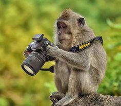 Monkey - camera