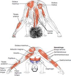 Anatomy of an almost whole body stretch that also gives the benefits of building head and handstand strength.