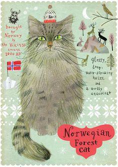Norwegian forest cat from Postallove