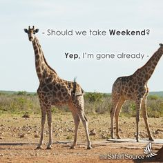Gone for the weekend! Himba People, Rock Art, Dune, Giraffe, Safari, Wildlife, Explore, Park, Animals