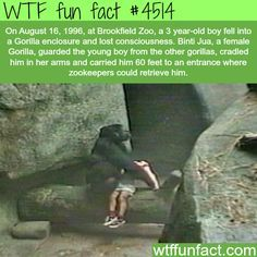 Gorilla saves a 3 year-old boy who fell into a Gorilla enclosure - WTF fun facts
