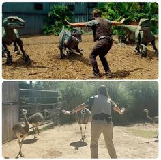 Zookeepers recreating the raptor squad.