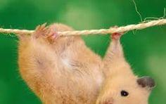 Resultado de imagen para como hacer una casa de carton para hamster