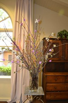 Blossoming curly willow