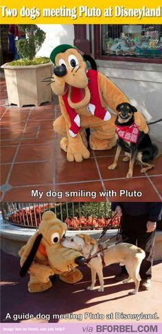 Dogs Meeting Pluto At Disneyland…