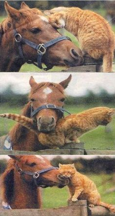 Cat and horse love to hang out together cats/kittens horses, Cute Baby Animals, Animals And Pets, Funny Animals, Smart Animals, Strange Animals, Wild Animals, Tier Fotos, Horse Love, Cat Love