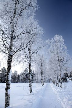 I wanted to show you how I have already lost 24 pounds from a new natural weight loss product and want others to benefit aswell. Weight Loss For Men, How To Lose Weight Fast, Reduce Weight, Picture Places, Lappland, Winter Pictures, Winter Landscape, The Good Old Days, Beautiful Landscapes