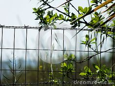 Steel wire fence surrounded with greenery and trees