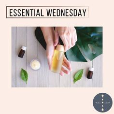 """Present Holistic Life Coach on Instagram: """"(Versão em português abaixo)  Hello everyone!   Essential Oils: Poisonous when Misused!  Essential oils are derived from chemical parts of…"""" Coach, Hello Everyone, Aromatherapy, Essential Oils, Essentials, Presents, Instagram, Life, Gifts"""
