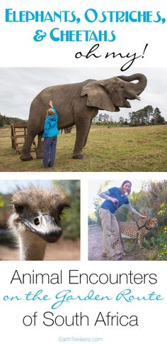 Here is your free essay on Wildlife Conservation