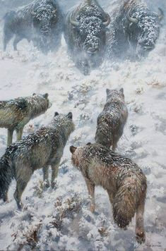 Standoff: a herd of buffalo (bison) face off against a wolf pack in the snow. Wildlife art by John Seerey-Lester. Nature Animals, Animals And Pets, Cute Animals, Wild Animals, Wolf Spirit, Spirit Animal, Beautiful Wolves, Animals Beautiful, Beautiful Beautiful