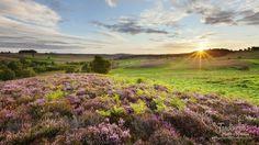 Campo británico al amanecer - http://jardineriaplantasyflores.com/fotos/campo-britanico-al-amanecer/