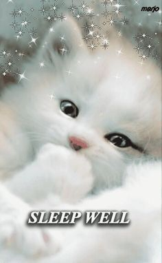 Such a very cute cat😍 Beautiful Cats, Animals Beautiful, Cute Baby Animals, Funny Animals, Funny Cats, Kittens Cutest, Cats And Kittens, Good Night Greetings, White Cats