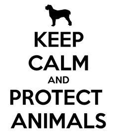 Restez calmes et protégez les animaux. #JC# Good idea in any language.