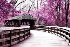 covered bridge surrounded by purple trees in Wildwood Metro Park in Toledo, Ohio Love Bridge, Old Bridges, Zen, Toledo Ohio, Covered Bridges, Malaga, Places To See, Nebraska, Beautiful Places