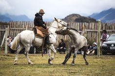argentinian rodeo,