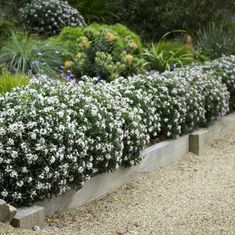 I've been trying with some low hedges in my coastal garden. Both the Daphne and . I've been trying with some low hedges in my coastal garden. Both the Daphne and Leptospermum hedges work well in my informal and mostly native plant g. Hedges Landscaping, Garden Hedges, Backyard Pool Landscaping, Landscaping Ideas, Back Gardens, Outdoor Gardens, Roof Gardens, Simple Garden Designs, Modern Gardens
