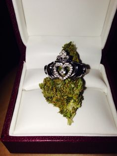 If you wanna marry a stoner girl..