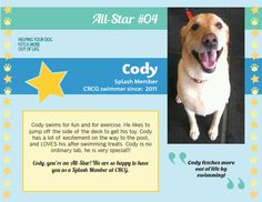 Meet CRCG Club FETCH All Star, Cody!! Cody fetches more out of life by swimming!