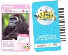 101 Western Lowland Gorilla