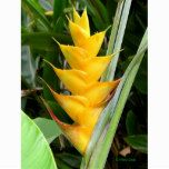 Heliconia Caribaea Best Picture For tropical garden ideas exotic flowers For Your Taste You are look Strange Flowers, Rare Flowers, Flowers Nature, Exotic Flowers, Tropical Flowers, Amazing Flowers, Beautiful Flowers, Tropical Landscaping, Landscaping Plants