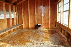 """Description of the steps involved in the semi-annual cleaning done for chicken coops when using the """"deep litter"""" method for managing coop sanitation."""