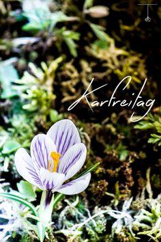 Karfreitag Good Friday Krokus Flower Flowers Blumen Blume Blüte Blossom Bloom Garten Garden Easter Ostern Detail Details Flora Plants Plant Pflanze Pflanzen Moos Dosh