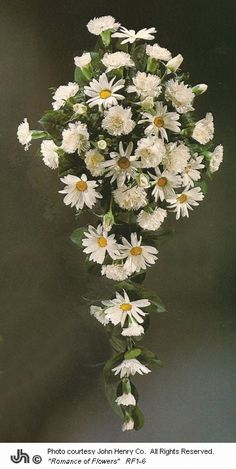 Cheap Bridal Bouquets - Daisies and carnations  http://www.wedding-flowers-and-reception-ideas.com/cheap-bridal-bouquets.html