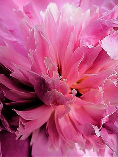 Inside The Pink Photograph by Beth Akerman - Inside The Pink Fine Art Prints and Posters for Sale