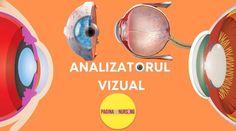 Analizatorul vizual - Analizatorii (organele de simț)