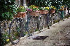 Imagem de Stock: Bicicletas do vintage com grupos de flores. Imagem: 16375011