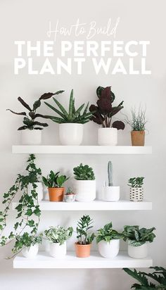 Looking to build a gorgeous, oxygen-filled plant wall in your home? This guide … Looking to build a gorgeous, oxygen-filled plant wall in your home? This guide [. Indoor Plant Shelves, Indoor Plant Wall, Indoor Plants, Hanging Plant Wall, Indoor Hanging Planters, Shelves With Plants, Plant Wall Decor, Patio Plants, Diy Hanging