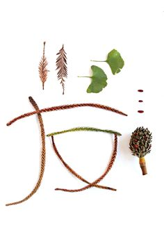 Pequeña colección de restos de plantas caídas del Jardín Botánico de Lisboa. Ramas secas de tejo, hojas de ginko, piña y semillas de magnolia y ramas de araucaria que forman el símbolo de amigo en la grafía japonesa Kanji.