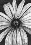 J Ferwerda - Wild Flower