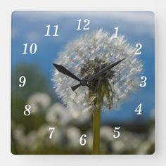 Beauty Of A Dandelion Square Wall Clock Wall Clocks, Hand Coloring, Wild Flowers, Black And Grey, In This Moment, Photography, Beauty, Photograph, Fotografie